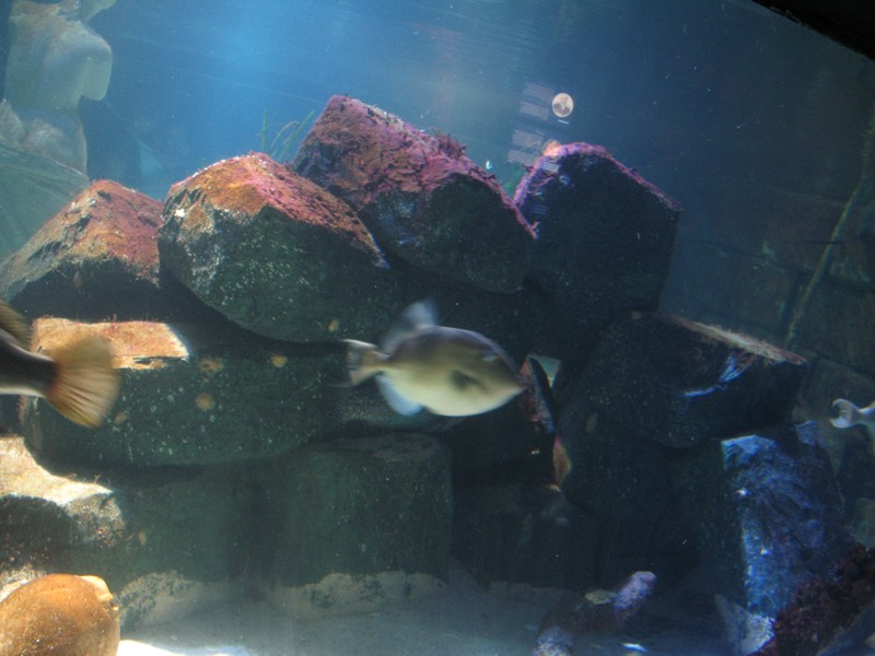 Sealife in Munich