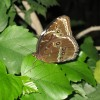 schmetterling004