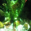 sealife munich 002