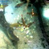 sealife munich 004