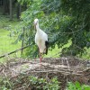 wildparkpoing002
