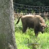 wildparkpoing005
