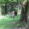 wildparkpoing011
