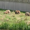 wildparkpoing013