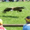 wildparkpoing015
