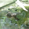 zoo munich 004