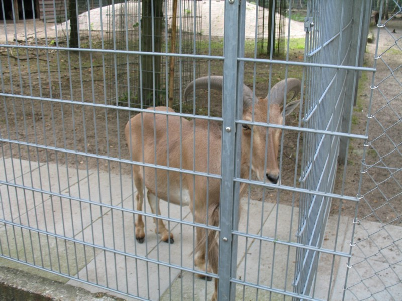 Tierpark Walldorf